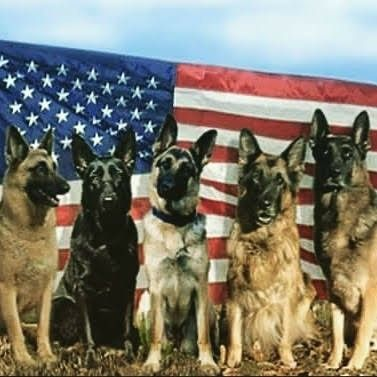 God Bless America Military Working Dogs Military Service Dogs