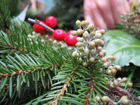 Heavy Petal » How to: make an evergreen wreath
