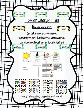 sorting activities, comparing activities, graphic organizers, assessment, poster for the flow of energy in an ecosystem (food webs, food chains, etc..)