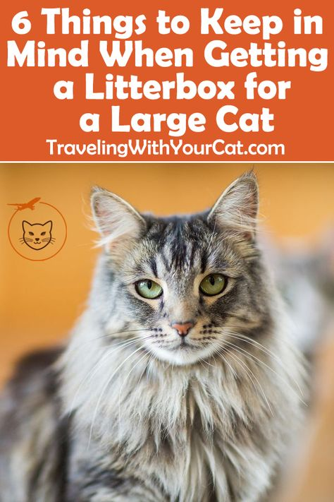 Best Litter Boxes For Large Cats Large Cats Best Litter Box Litter Box