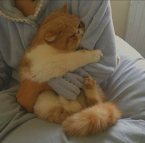 Pretty Animals, Cute Little Animals, Pretty Cats, Beautiful Cats, Cute Baby Cats, Cute Kittens, Cats And Kittens, Brown Cat, Cat Aesthetic