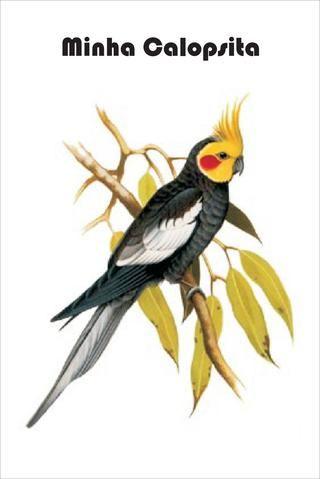 26396413 Curso Basico De Aromaterapia Gratuito Pinturas De Aves