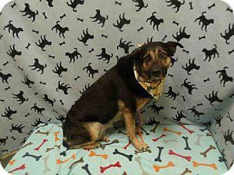 Pin By Diane Litter On Adopt Poor Dog German Shepherd Dogs Pets