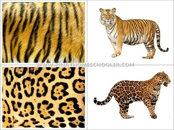 Animals Skin Covers Matching Cards By Pinay Homeschooler Shop Teachers Pay Teachers Animal Skin Animals Animal Flashcards