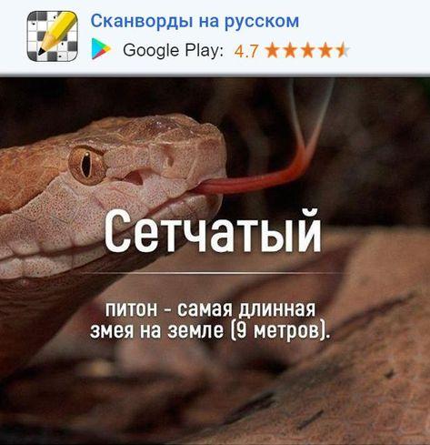 Сетчатый питон - самая длинная змея на земле [3 метров). — Сканворды- Вспомни забытые и научи новые слова. Доступно в Google Play. — #интересно #разум #интересное #факт #факты