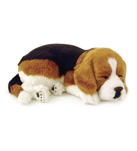 Perfect Petzzz Beagle Puppy For More Information Go To Image