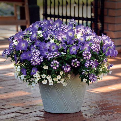 87995 Pk 3 Jpg Container Flowers Annual Plants Petunias