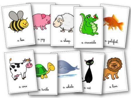 Flascards animaux                                                                                                                                                      Plus