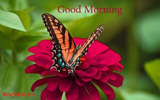 Free Download 60 Beautiful Amp Hd Good Morning Images With Flowers For Whatsapp And Faceb Good Morning Flowers Pictures Good Morning Flowers Morning Flowers
