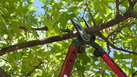 Organic Gardening Articles | Organic Gardening Videos | Organic Recipes | How to Garden Organically