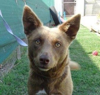 Pin On Dogs Fur Adoption