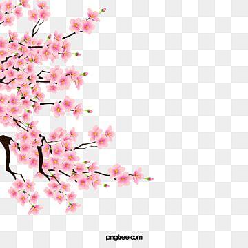 Vector De Flor Decoracao Flores Garland Cor De Rosa Imagem Png E Psd Para Download Gratuito In 2021 Cherry Blossom Art Cherry Blossom Watercolor Cherry Blossom Vector