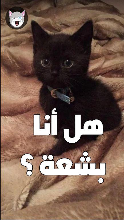 تفسير حلم القطة السوداء أو القط الأسود بالتفصيل المفيد Cats Black Cat
