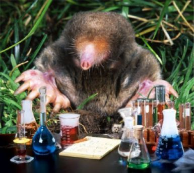 A mole is a SI base unit of measurement. This is a brief explanation of the mole unit and three worked example problems using the mole in chemistry.