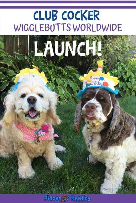 Club Cocker Wigglebutts Worldwide Launches Cocker Spaniel