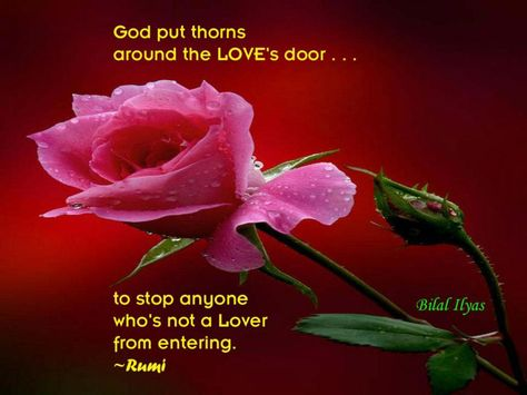 """God put thorns around the LOVE's door . . .  to stop anyone who's not a Lover from entering."" ~Rumi"