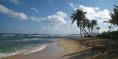 Palms at Pelican Cove