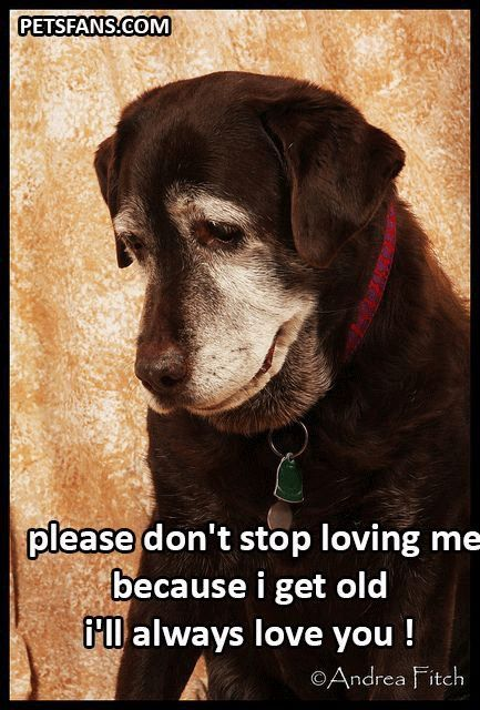 Please Don T Stop Loving Me Because I Get Old I Ll Always Love