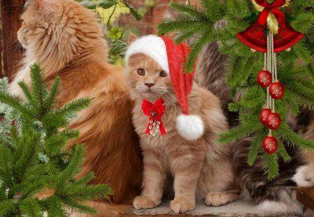 Cute Christmas Kitty Cute Christmas Kitty Christmas Cats Christmas Christmas Time