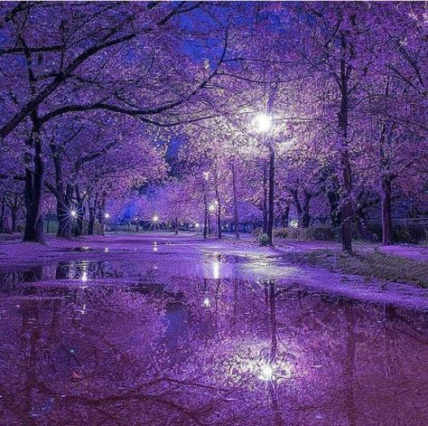 Purple street in Japan | #sakuras #sakuraflowers #Japan #trip #purplestreet