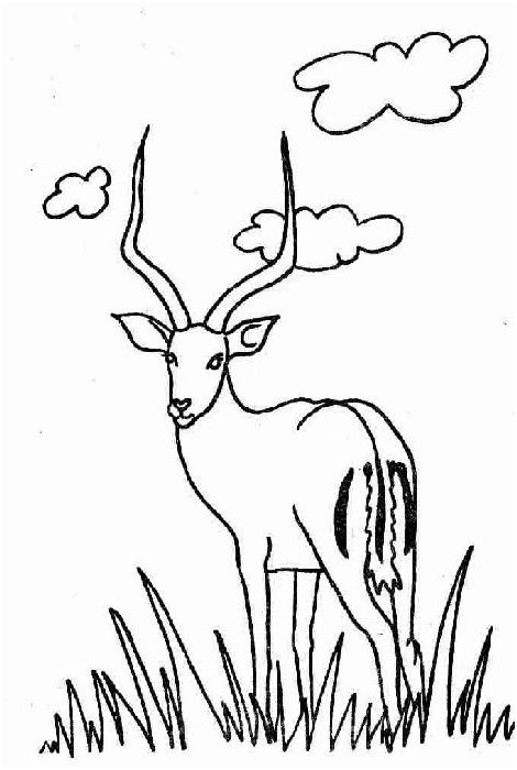 15 Amusant Coloriage Gazelle Collection Art Coloring Pages