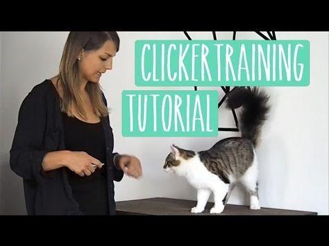 Clickertraining Katze Anleitung Tipps Tricks Fur Anfanger