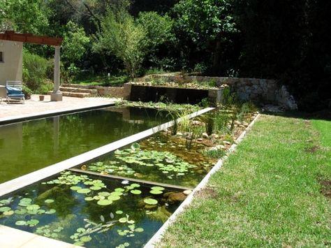 22 best piscine naturelle images on Pinterest Natural pools