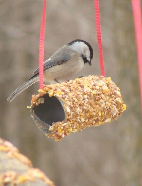Cómo hacer un comedero de #pájaros para tu #huerto urbano