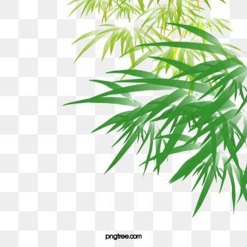 Folhas De Bambu Verde Caindo Material Bambu Folhas De Bambu Folha Png Imagem Para Download Gratuito Plant Leaves Bamboo Leaves Autumn Leaves