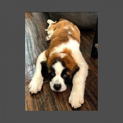 2018 Cutest Dog Contest Washingtonian Cute Dogs Dogs Cute