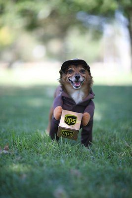 California Costumes Ups Delivery Driver Dog Costume Large Chewy Com California Costumes Dog Costume Ups Delivery Driver