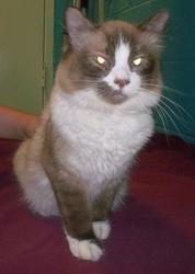 Adopt Max On Love Pet Pet Adoption Cute Cats