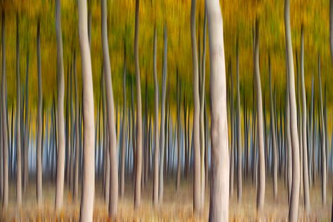 Using motion blur, this stand of trees moves a little more on the side of art, but these trunks are almost made for the effect with their clean and contrasty edges.