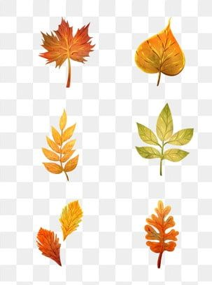 Autumn Leaves Fallen Maple Hand Painted Material Autumn Leaves Autumn Fall Png Transparent Clipart Image And Psd File For Free Download Autumn Leaves Original Watercolors Paint Background