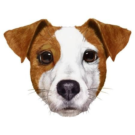 Pin By Dog Portraits On Terrier Dog Coloring Page Puppy Drawing