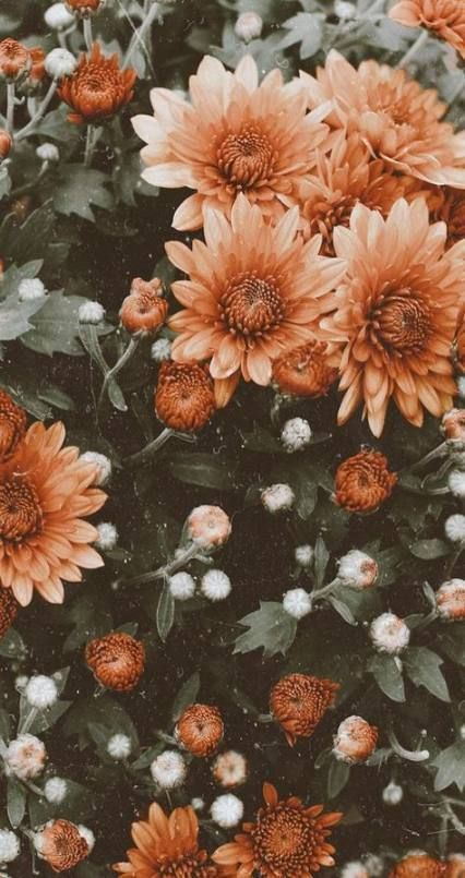 54 Trendy Vintage Wallpaper Flowers Wallpapers Flowers Vintage Wallpaper 128915608070828449 In 2020 Flower Iphone Wallpaper Sunflower Wallpaper Floral Wallpaper