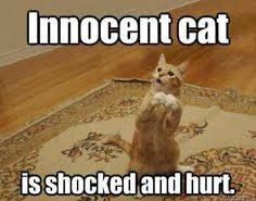 Dogsmemes Catsmemes Funny Animal Pictures Cat Memes Dogs Memes