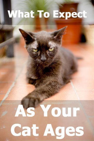 What To Expect As Your Cat Ages Health And Behavior Changes In