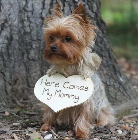 Puppy Sign Here Comes My Mommy Dog Flower Girl Ring Bearer Sign