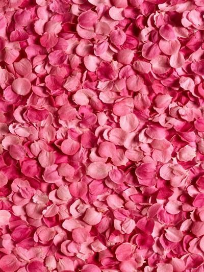 Katebackdrop:Kate Valentine'S Day Red Rose Petals Photography Backdrop