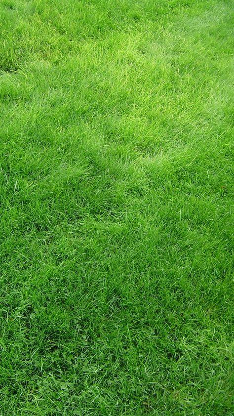 Texture Grass Field Green Iphone 6 Wallpaper Grass Wallpaper Green Wallpaper Grass Textures