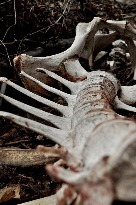 photography dead my photography skeleton bones spine macro utah hip bones Dragging a Dead Deer Up a Hill ephraim deer spine Dragon Age, Dragon Bones, Maleficarum, The Ancient Magus, Fotografia Macro, Hannibal Lecter, Necromancer, After Life, Skull And Bones