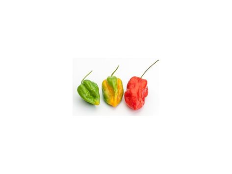 Liveseeds Jamaican Chilli Pepper 5 seeds 5 Free Hot  Scotch Bonnet