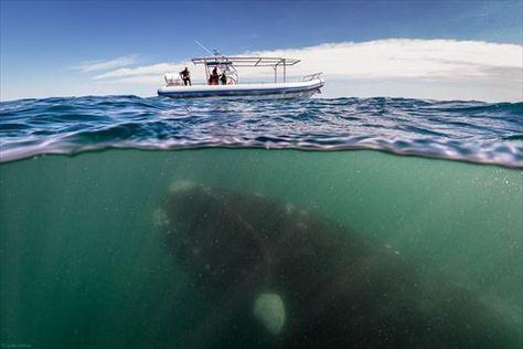 クジラ 恐怖 症