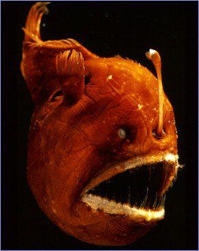 Deep Sea Creatures..