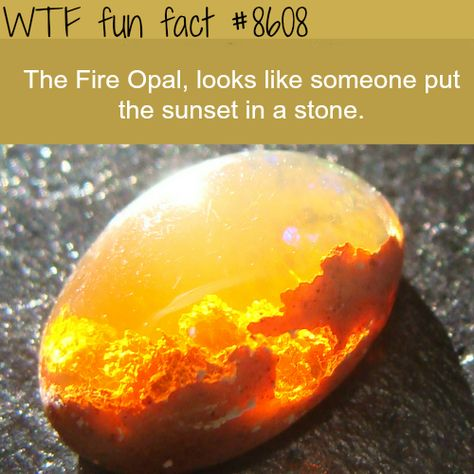 WTF Facts - Page 239 of 1046 - Funny, interesting, and weird facts Wow Facts, Unbelievable Facts, Funny Facts, Funny Humor, Memes Humor, Movie Facts, Liking Someone, The More You Know, Things To Know