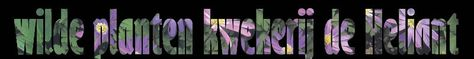 Kwekerij De Heliant is een bijzondere plek, waar planten de ruimte krijgen. Veel planten staan in de volle grond op bedden. Ze krijgen alle gelegenheid om lekker te groeien. Insecten en dierenleven is hier volop aanwezig.  Al het werk op deze kwekerij gebeurt zonder gebruik van kunstmest en bestrijdingsmiddelen. Wel werken we hier op de zandgrond met compost en bladcompost, kalk en organische meststoffen