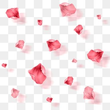 Floating Rose Petals Element Free Flower Petals Petal Floating Petal Element Png Transparent Clipart Image And Psd File For Free Download Rose Petals Falling Rose Petals Drawing Pink Roses Background