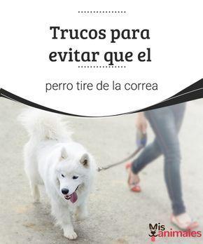 Tipos De Collares De Castigo Para Perros Trucos Para Evitar Que El Perro Tire De La Correa Evitar Que El