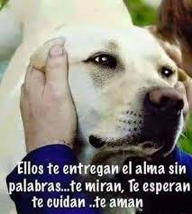 Resultado De Imagen Para Perros Frases Amor Con Imagenes